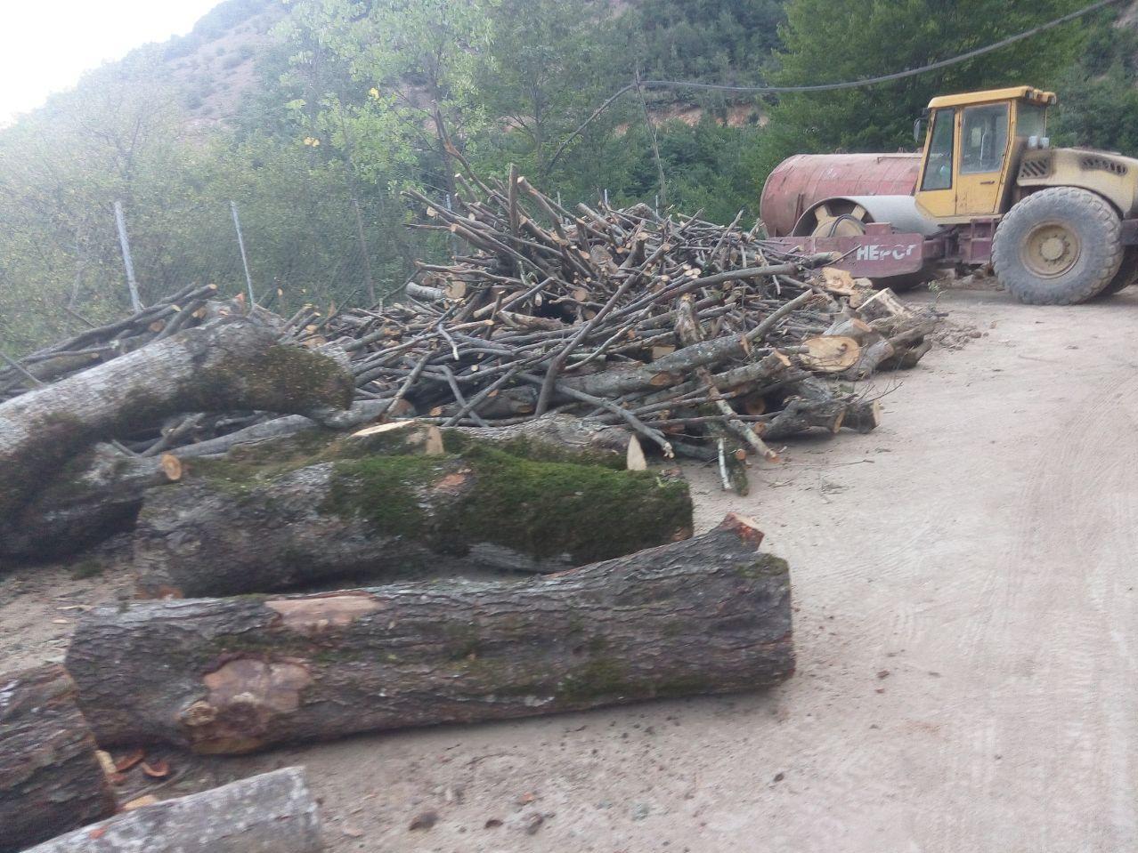 (تصاویر) ادامه غارت جنگلهای مرزنآباد