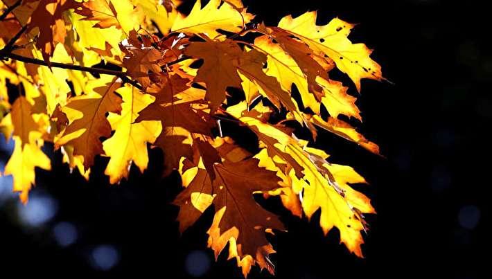 تصاویر حیرتانگیز از پاییز در سراسر جهان