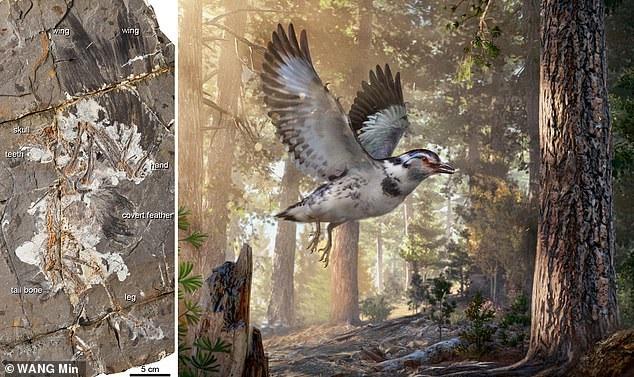 کشف فسیل پرنده ۱۲۷ میلیون ساله