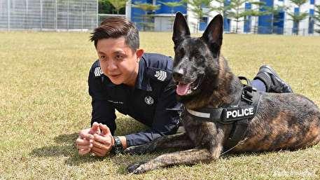 (ویدیو) رقابت سرسختانه سگهای حرفهای پلیس