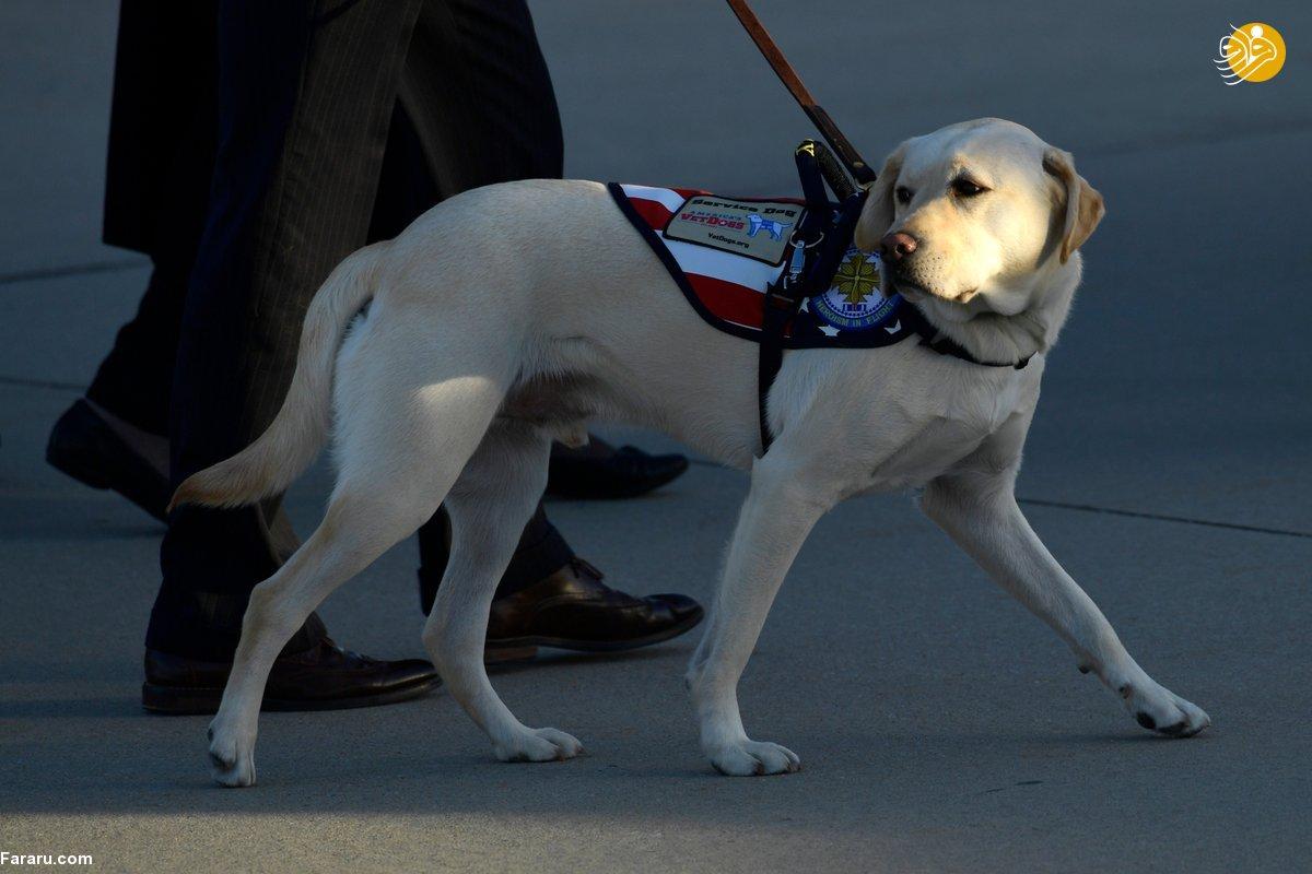 تصویری از سگِ بوش پدر خبرساز شد!