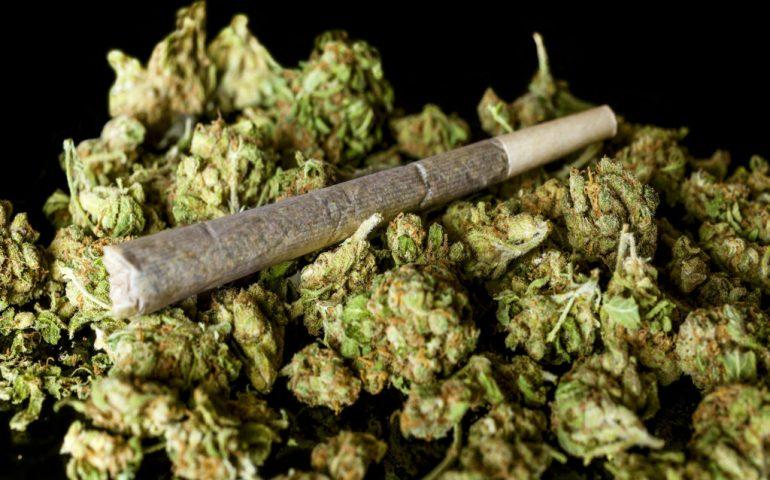 تصورات اشتباه درباره مخدر «گل»