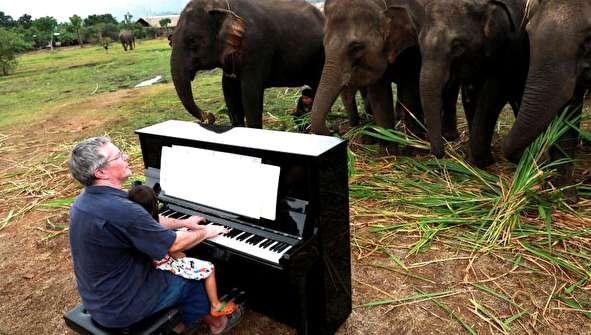 (تصاویر) مردی که برای فیلها پیانو میزند!