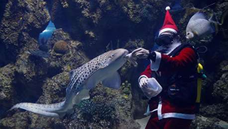 (ویدیو) بابا نوئل در آکواریوم!