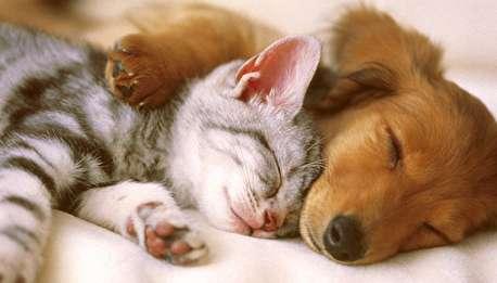 (ویدیو) نوازش سگ بیمار توسط گربه مهربان!