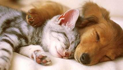 نوازش سگ بیمار توسط گربه مهربان!