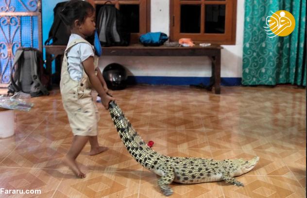 (تصاویر) تمساح و مار پیتون همبازی دختر ۳ ساله!