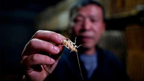 (تصاویر) کار پرسود یک کشاورز با پرورش ۱۰ میلیون سوسک!