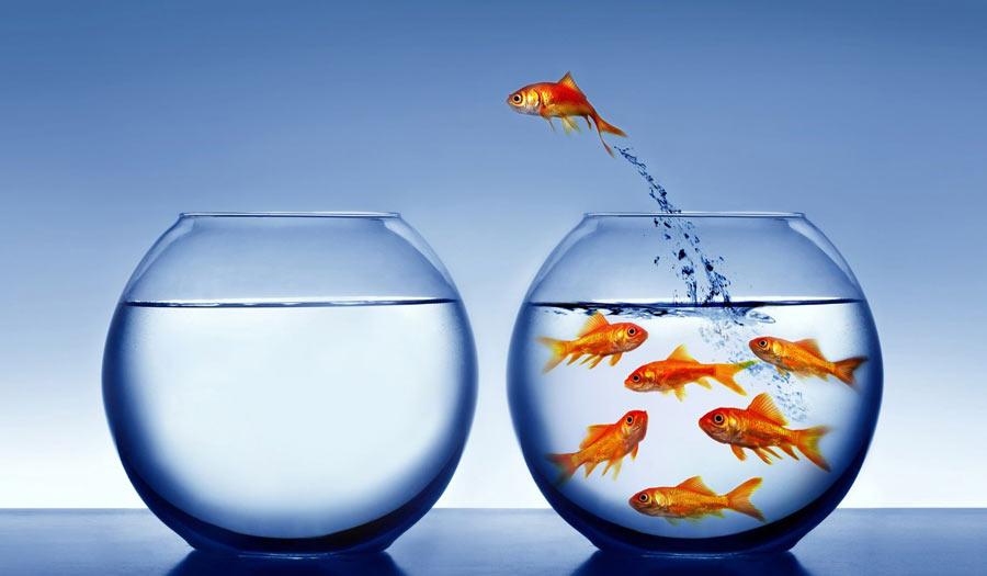 ماهی قرمز بده، کتاب بگیر!