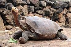 (ویدئو) بازنشستگی لاکپشتی که در نیم قرن ۸۰۰ بار پدر شد!