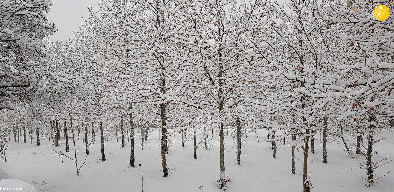 (تصاویر) برف در تهران؛ احتمال تعطیلی مدارس فردا