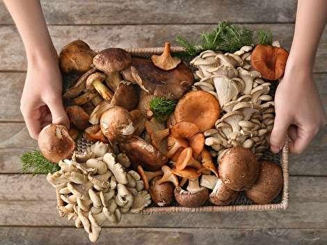 ۱۰ خاصیت قارچ؛ از کاهش وزن تا سلامت استخوان