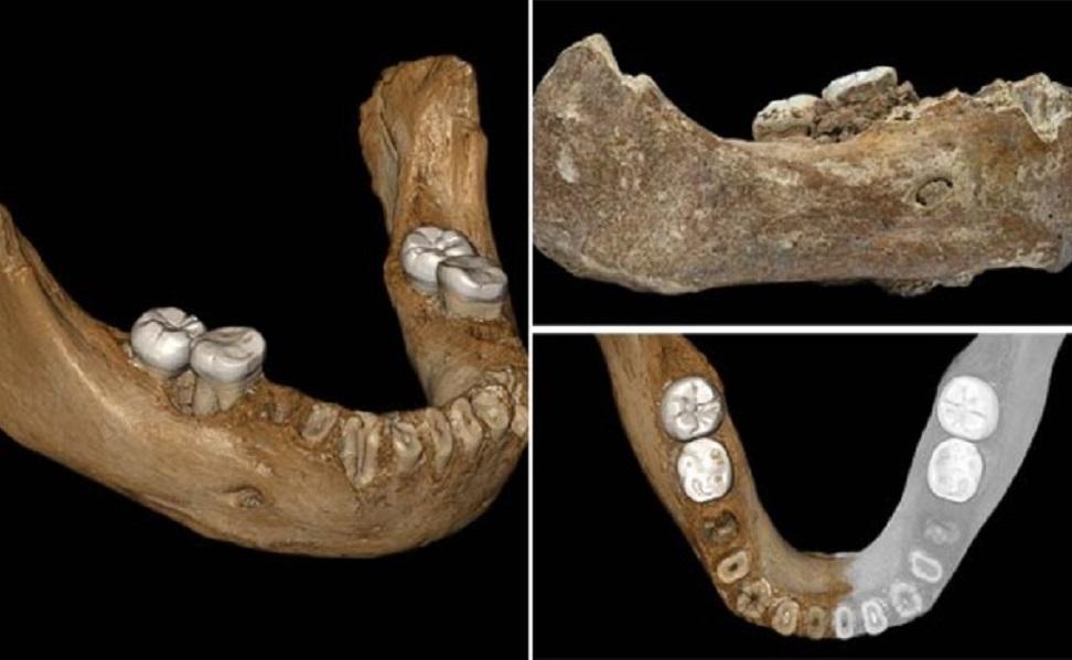 فسیل انسانهای نخستین در چین کشف شد