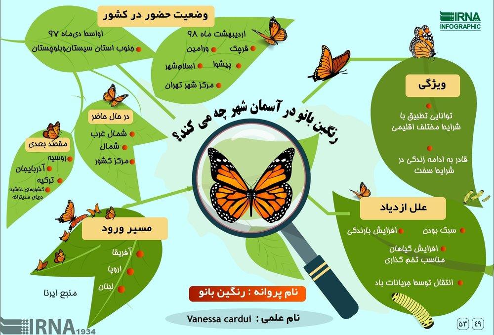 (اینفوگرافیک) پروانهها در تهران چه میکنند؟