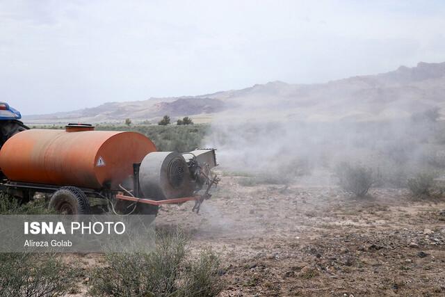 (ویدئو) آخرین وضعیت حمله ملخهای صحرایی به کشور