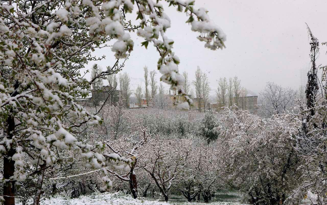 هواشناسی: هوای سرد تا جمعه باقی میماند