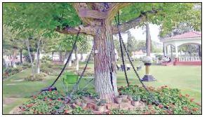 درختی که بازداشت شد