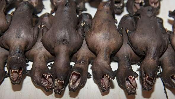 (تصاویر +16) کشتار سگ، خفاش، مار و میمون در یک بازار وحشتناک