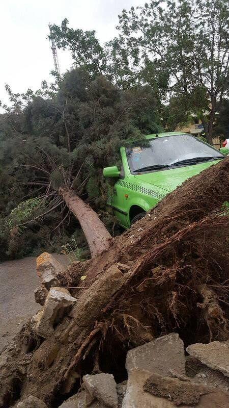 (عکس) سقوط درخت روی خودرو بر اثر طوفان تهران