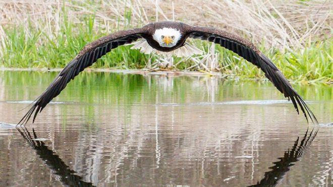 'غافلگیر' شدن عکاس از واکنشها به تصویر عقاب سرسفید