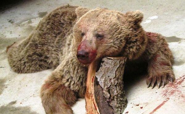 قتل خرسها؛ زوایای مختلف یک تراژدی تکراری
