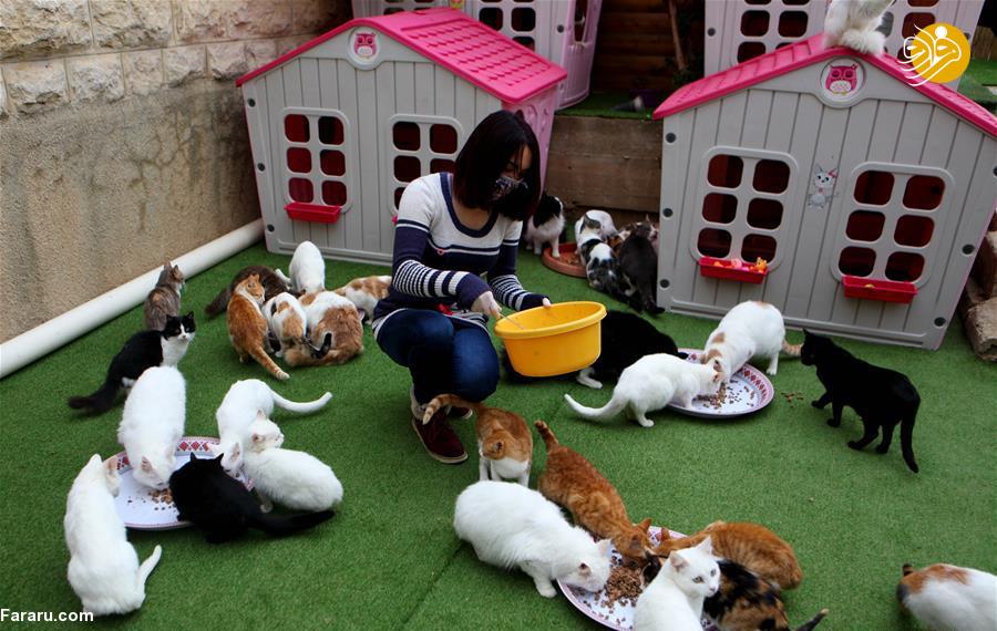 (تصاویر) پناهگاه لاکچری دختر فلسطینی برای گربههای خیابانی