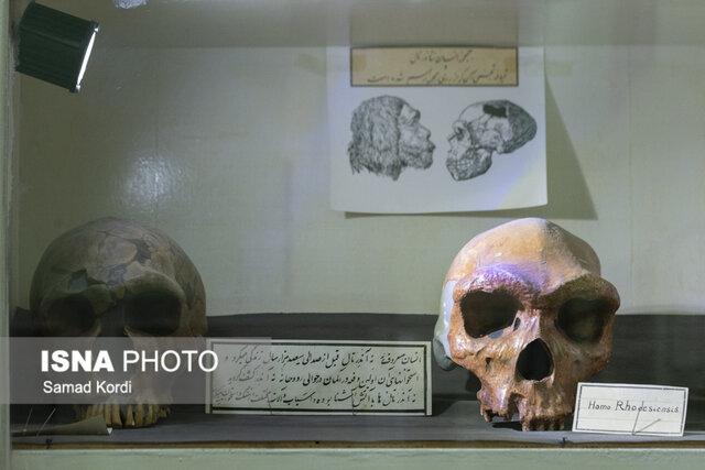 (تصاویر) خاصترین موزه ایران؛ از جمجمه نئاندرتال تا بز چهارچشم