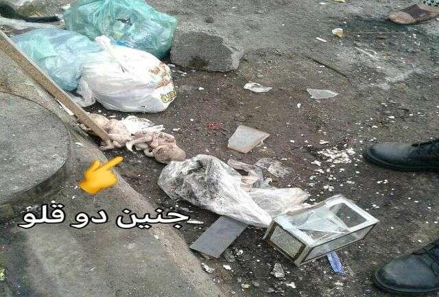 تصویری تکاندهنده از جنین دوقلوها در زبالههای رشت!