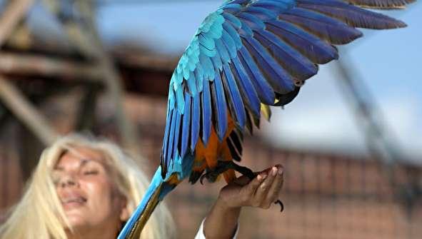 (تصاویر) نمایی متفاوت از ونزوئلا؛ بهشت طوطیها!