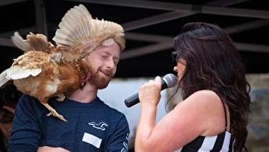 (تصاویر) مسابقه دو و میدانی مرغها!