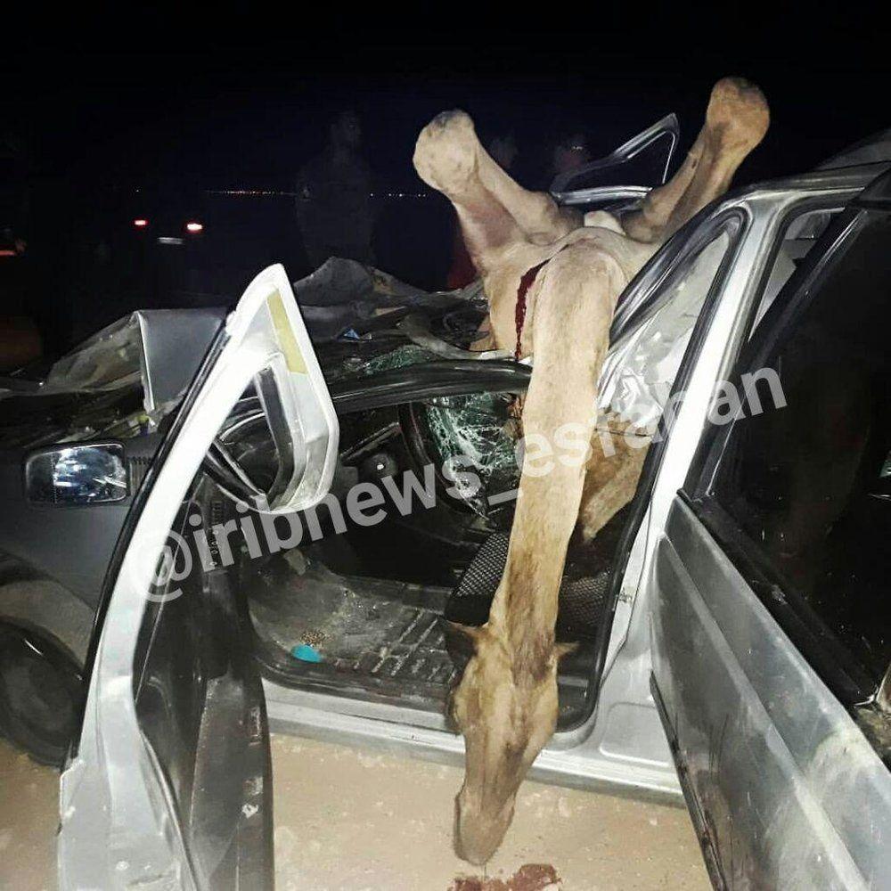 (عکس) تصویری از تصادف خونین پژو با ۵ شُتر در اصفهان