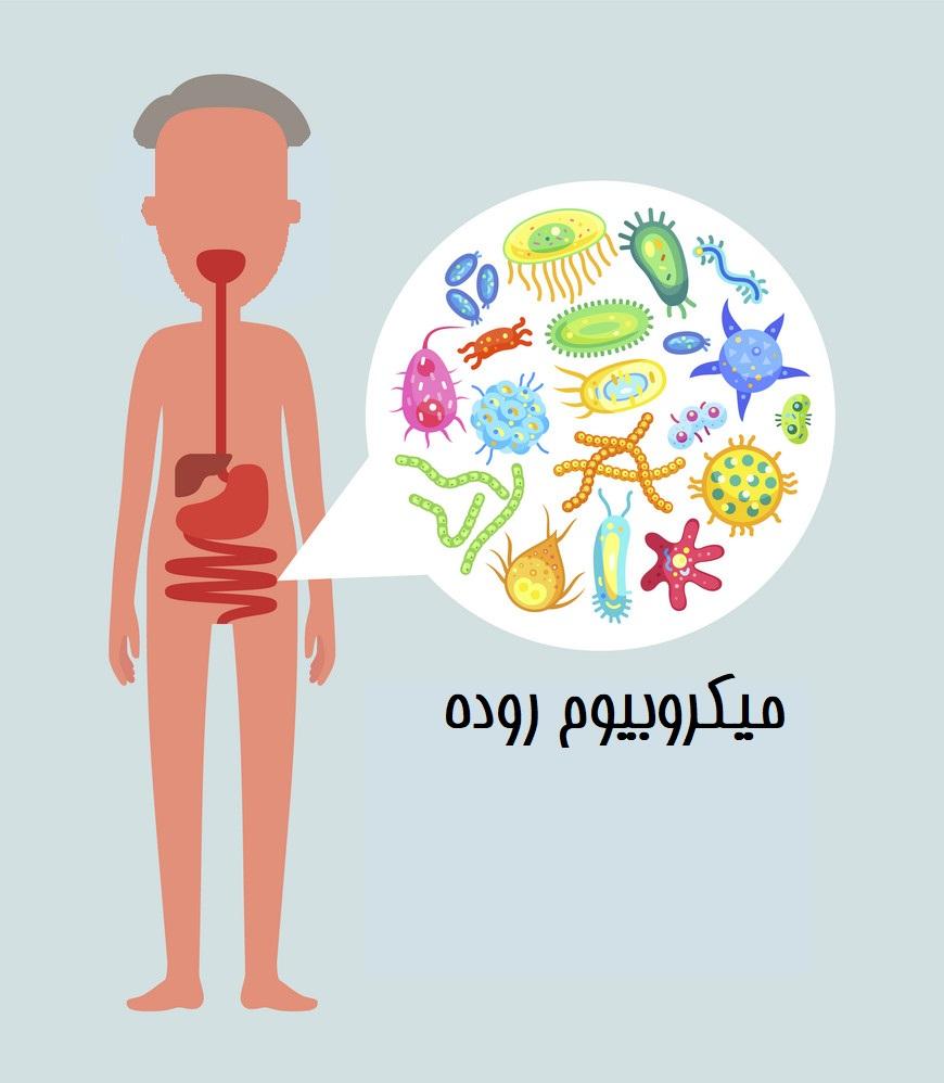 مراقب باکتریهای رودهی خود هستید؟