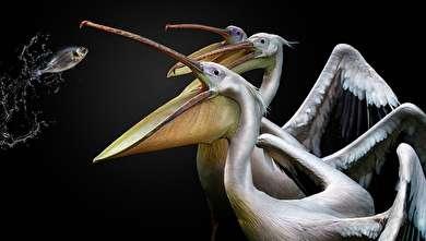 (تصاویر) مسابقه عکاسی از پرندگان در سال ۲۰۱۹
