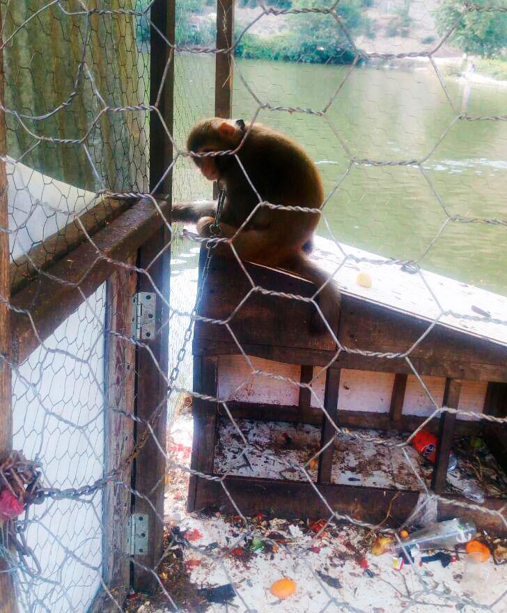 تهدید به قتل خبرنگار فرارو به دلیل انتشار تصاویر حیوان آزاری!