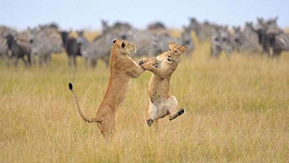 تصاویر طنز از حیوانات!