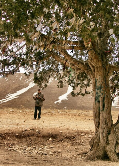 واکنش میراث فرهنگی به ثبت ملی درخت