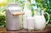 همه بایدها و نبایدها در رابطه با شیر خام