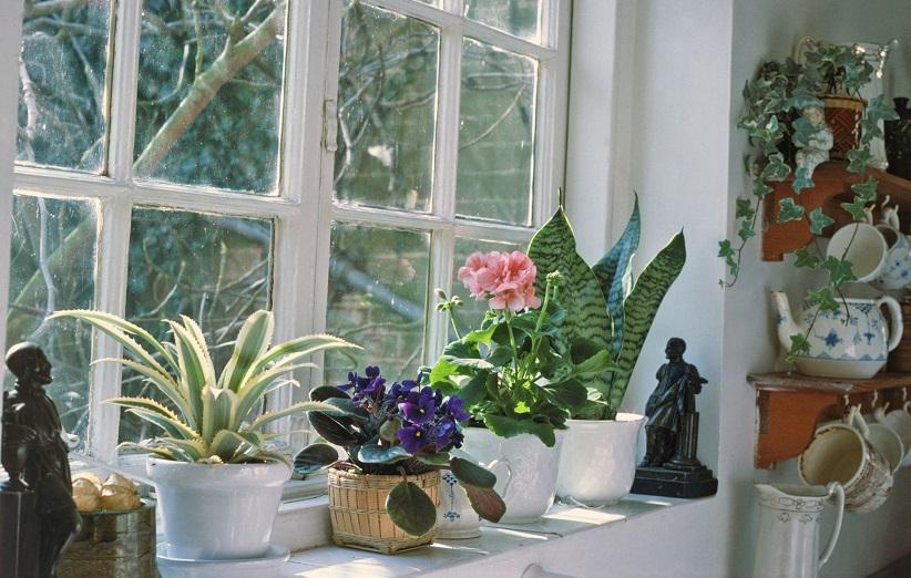 تهیه کود خانگی برای گیاهان خانگی و آپارتمانی با مواد طبیعی