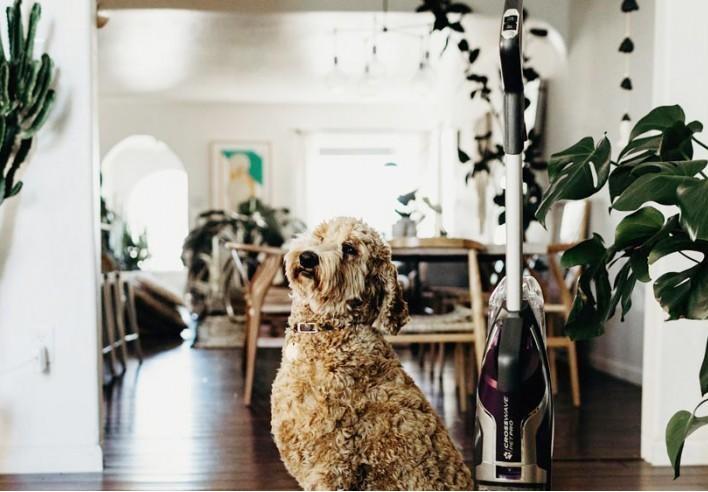 قانون آپارتمان نشینی؛ از نگهداری حیوان تا همسایه که شارژ نمی دهد/ کامل نیست