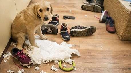 (ویدئو) وقتی سگها از کارشان خجالت زده میشوند