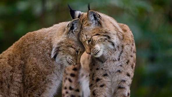 (تصاویر) ابراز عشق حیوانات بیشتر از انسانهاست؟!
