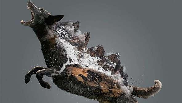 (تصاویر) سورئال حیوانات با فتوشاپ