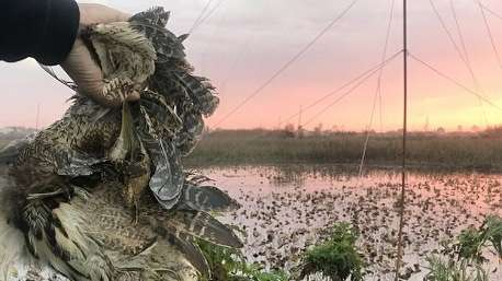 کشتار بیرحمانه پرندههای مهاجر در فریدونکنار