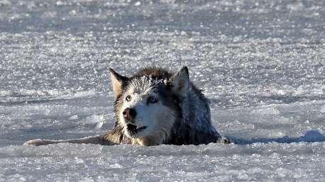 نجات سگ گرفتار در یخ با بیل مکانیکی