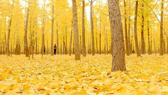 (تصاویر) جادوی رنگها در طبیعت پاییزی