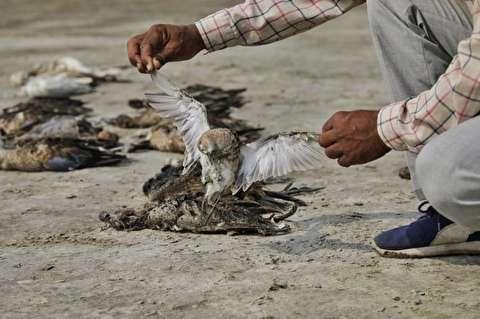 مرگ اسرار آمیز هزاران پرنده در راجستان هند