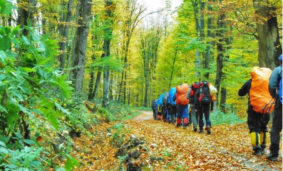 سفر به جنگل راش؛ ماجراجویی کوتاه پائیزی در دل درخت و مه