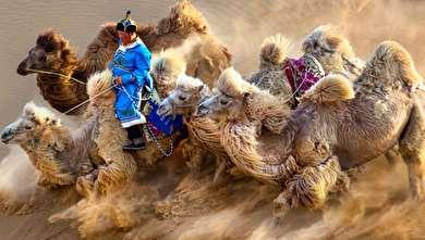تصاویر برگزیده مسابقه عکاسی سیه نا ۲۰۱۹