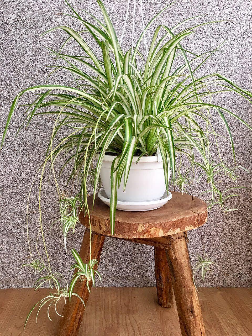 ۱۰ گیاه گلخانهای که هوای محیط را تصویه میکنند