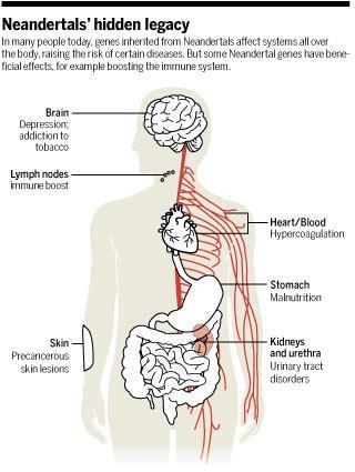 افسردگی، چاقی و اعتیاد، میراث ژنتیکی که از نئاندرتالها داریم